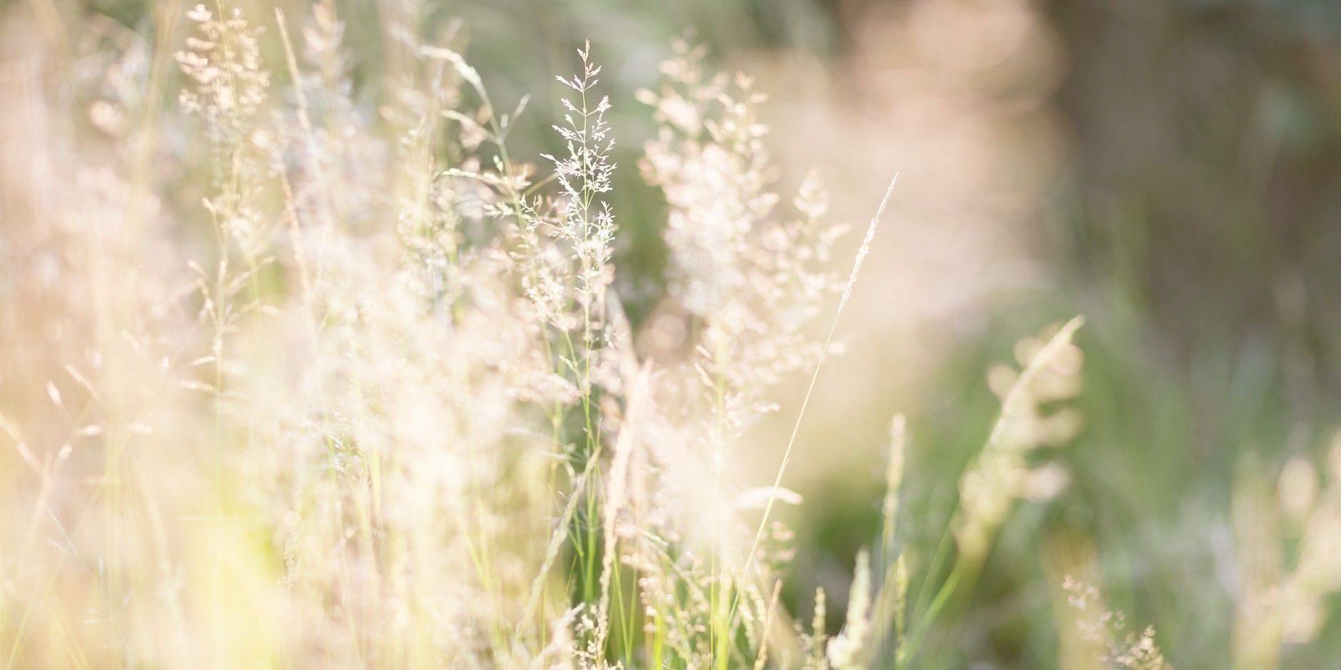 Pollen und Gräser lösen Allergien aus, doch was hilft gegen Heuschnupfen?