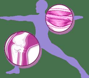 Bone Muscle Benefit