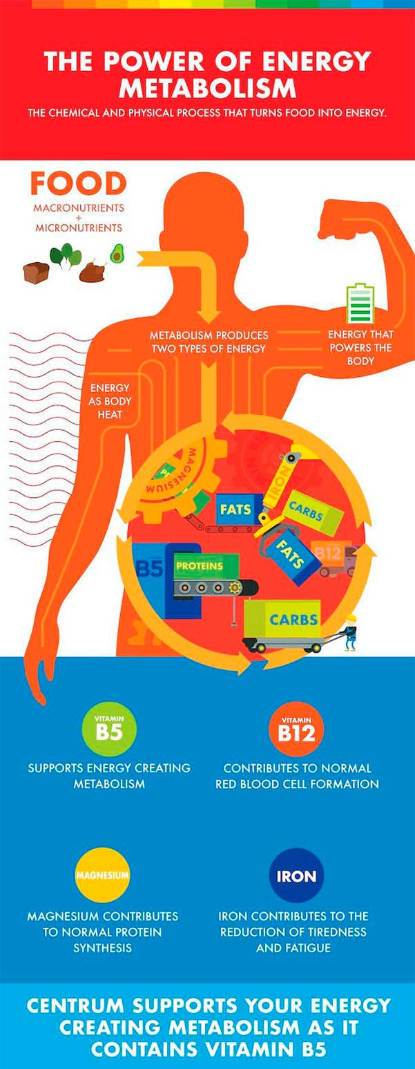 Infographic about metabolism.