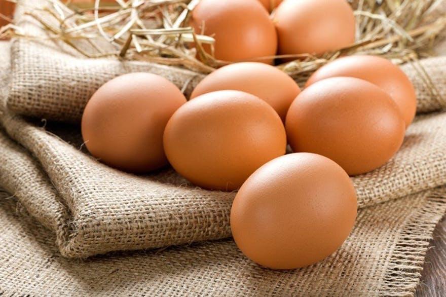 Many_eggs