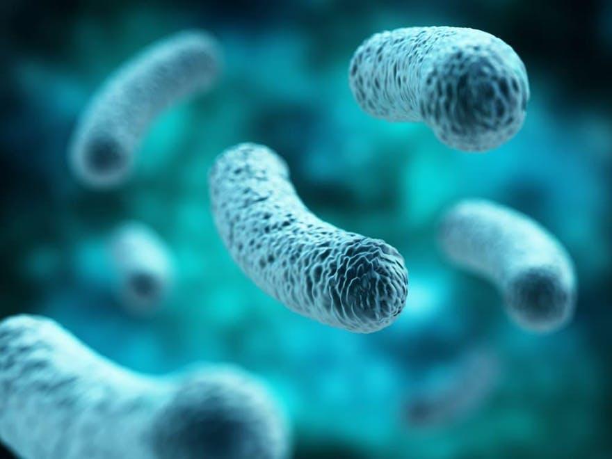 Darmflora Bakterien
