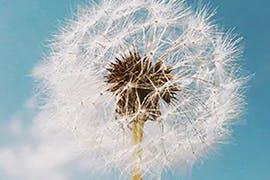 Seasonal Allergies and Migraine...