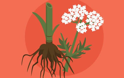 plants and roots icon