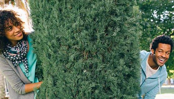 Tree-Huggers Beware Spring is in the Air