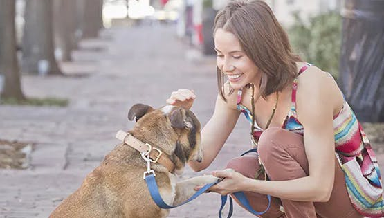 Hypoallergenic Pets: Fact or Fiction?