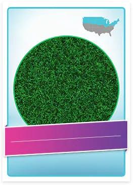 Kentucky Blue Grass allergenic pollen