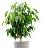 Best_Plants_Worst_2