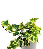 Best_Plants_Worst_4