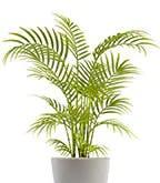 Best_Plants_Worst_5