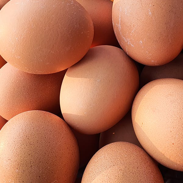 Close up of eggs.
