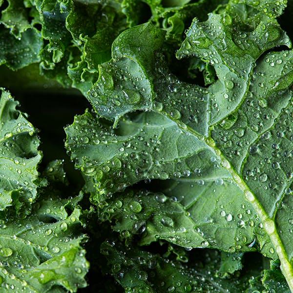 Close up of freshly washed kale.