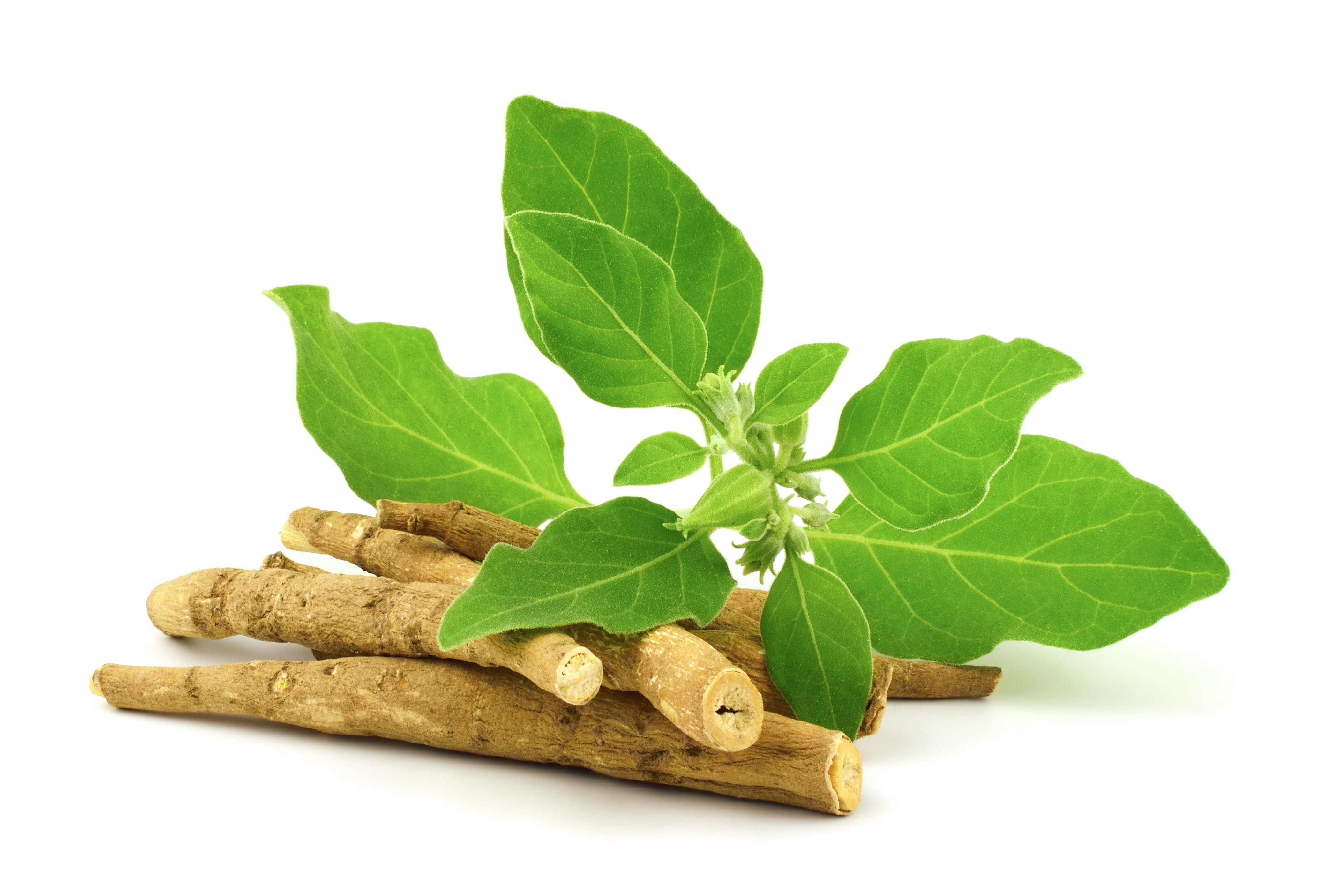Ashwagandha dried root with fresh leaves