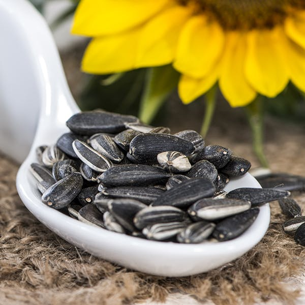 sunflower-seeds images