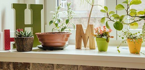 Best (and Worst) Indoor Plants For Allergies