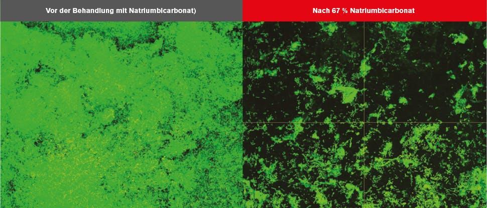 CLSM-Bilder (Confocal Laser Scanning Microscopy, konfokales Laser-Scanning-Mikroskop) des Biofilms