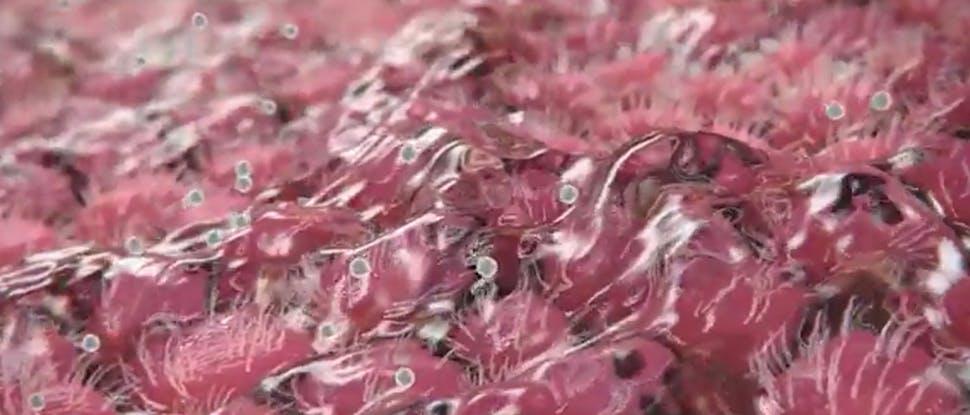 Sorbitol und Hypromellose