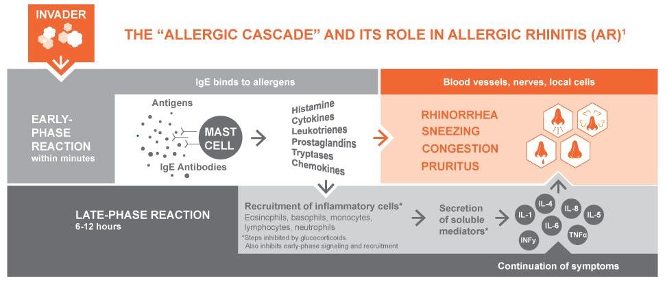 Mechanism of allergies