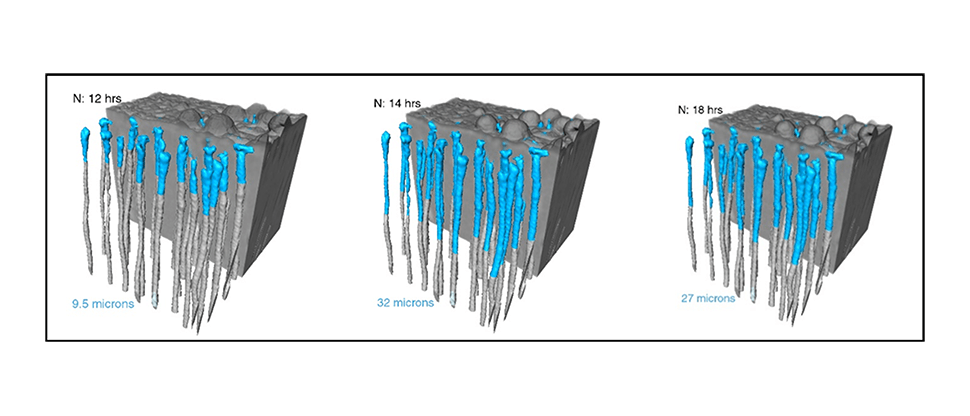 in vitro synchrotron data visualisation