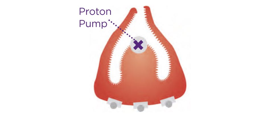 Visual of proton pump in stomach