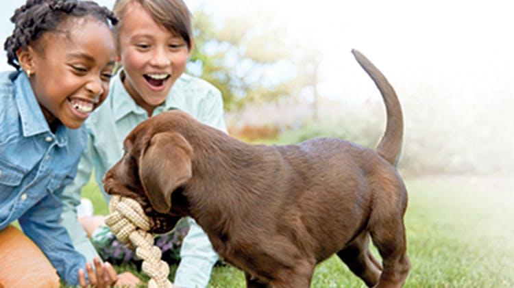 Allergy animal lifestyle