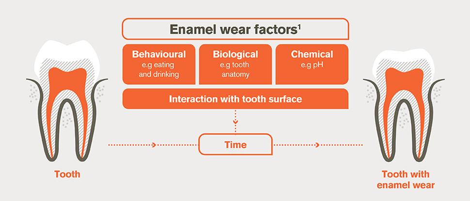 Enamel wear factors