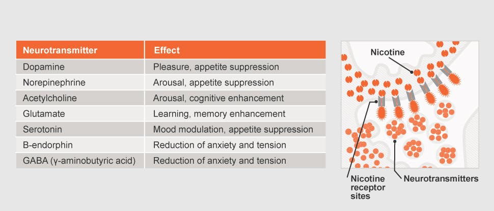 Neurotransmitters and effects