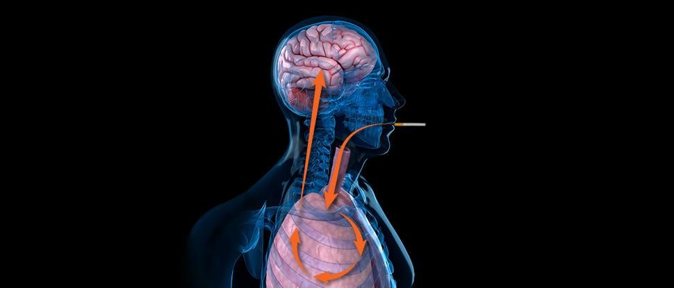 Cigarette nicotine absorption