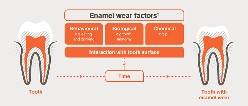 Enamel wear factors