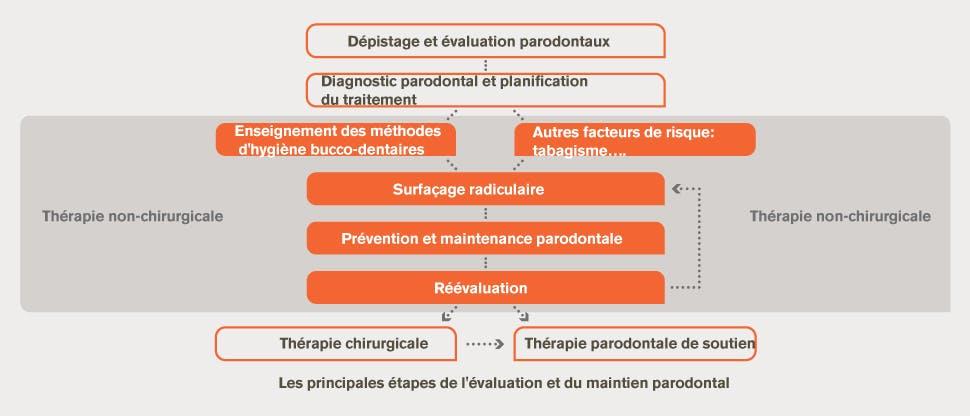 Évaluation paradontale et diagramme des traitements