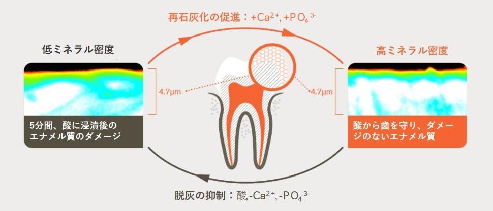 脱灰と再石灰化及び5分間の酸に浸漬後の変化