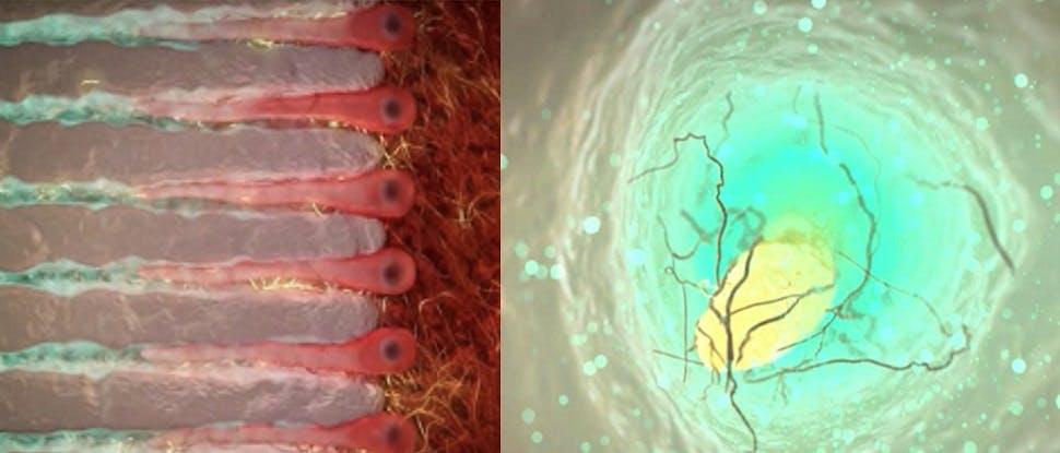 カリウムイオンにより鎮静化された神経