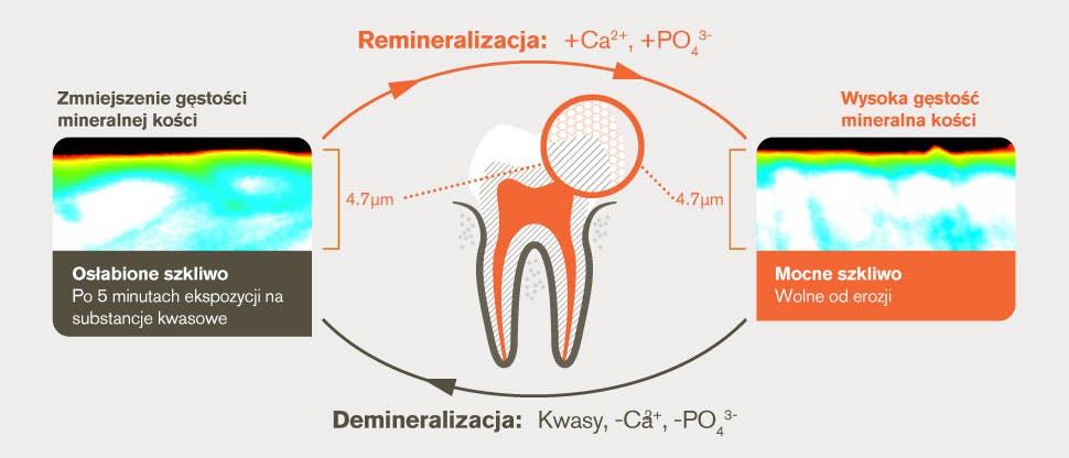 Demineralizacja i remineralizacja oraz proces po 5 minutowym działaniu substancji kwasowej