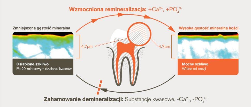 Proces demineralizacji i remineralizacji po 20 minutowym działaniu substancji kwasowej