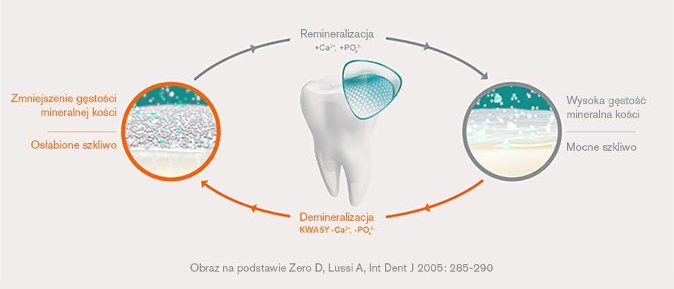 Cykl remineralizacji / demineralizacji