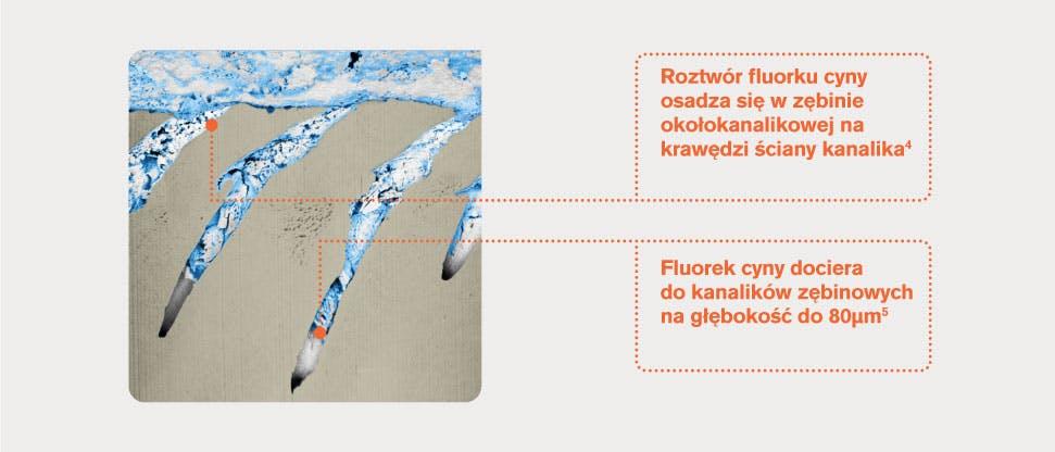 Reprezentatywny obraz FIB-SEM kanalików zębinowych