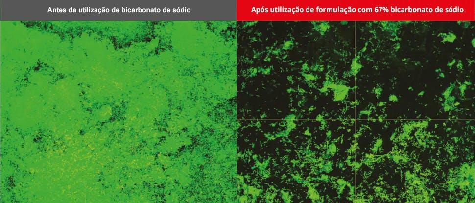 Imagens do biofilme obtidas por microscopia confocal de varrimento laser.