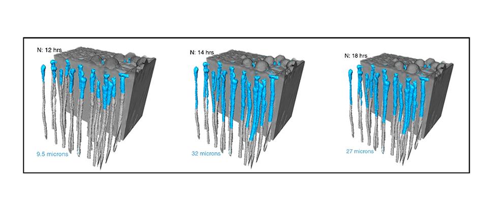 Visualização de imagem de sincrotão in vitro