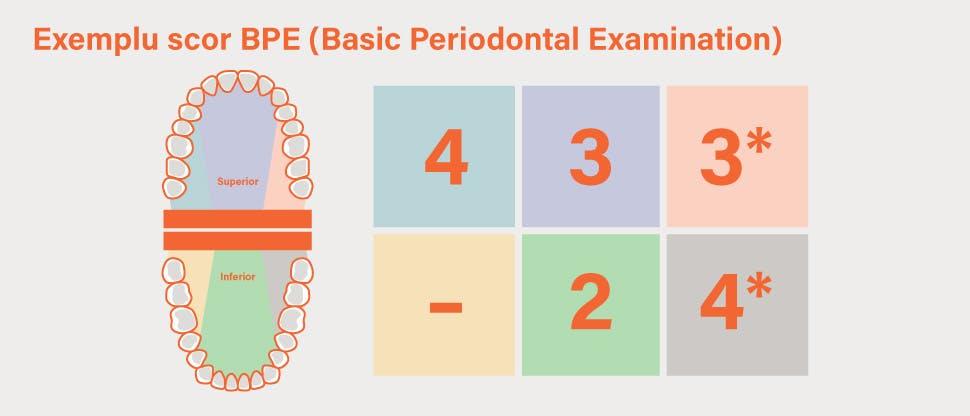 Pe parcursul examinării parodontale de bază, dentiţia este împărţită în diferite secţiuni