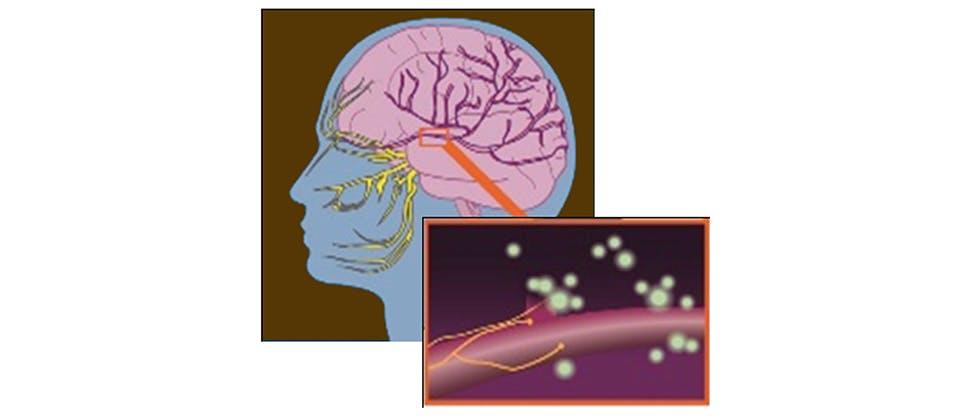 Funcționarea neuronilor în zona nervului trigemen
