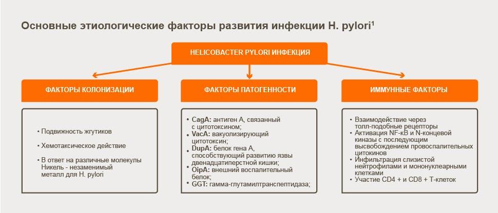 Osnosniye-etiologicheskie-faktory-razvitiya-infekcii-helicobacter-pylori