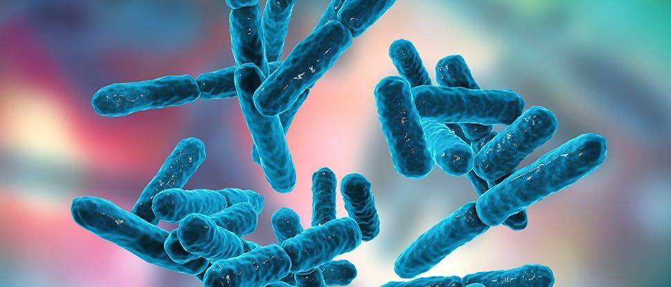 bacteria-bifidobacterium-gram-positive-anaerobic-rod-shaped-bacteria
