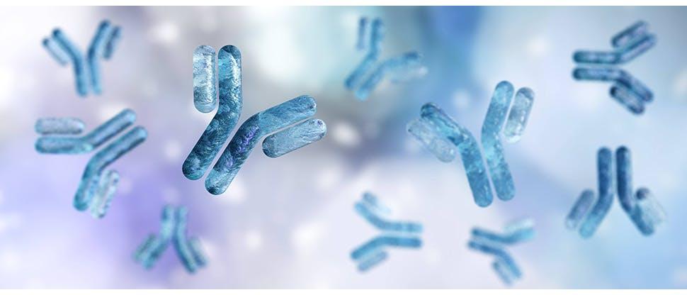 antibody-immunoglobulin-y-shaped