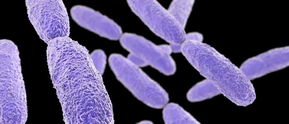 bacteria-klebsiella