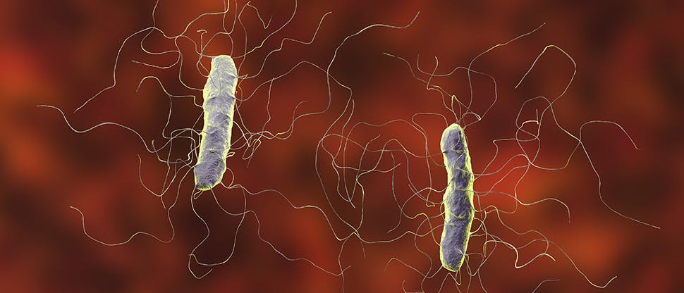 clostridium-difficile-bacteria-vegetative-form
