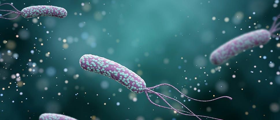 illustration-of-helicobacter-pylori-bacteria