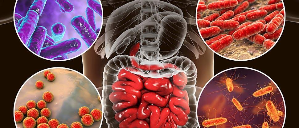 intestinal-microbiome-bacteria