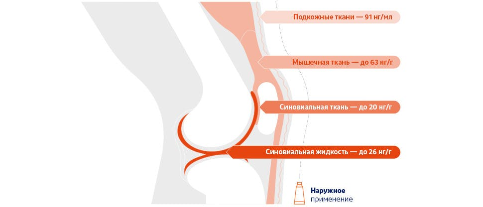 Диаграмма с указанием концентраций диклофенака, достигаемых в подлежащих тканях в области коленного сустава после наружного нанесения препарата2