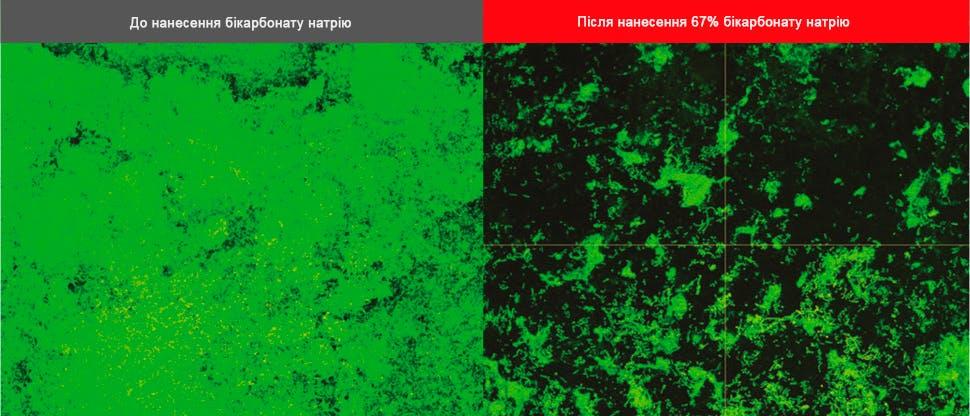 Зображення біоплівки, отримані за допомогою конфокального скануючого лазерного мікроскопа (CLSM)