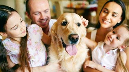 Sebuah Keluarga yang Bahagia Bermain dengan Binatang Peliharaan Mereka