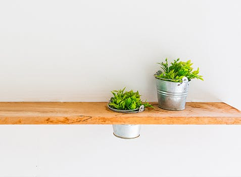 2 plants on a long indoor wooden shelf